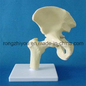 Human Six Joint Model, Medical Anatomical Model pictures & photos