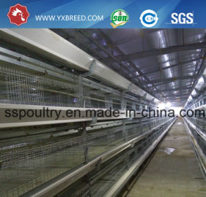 India Battery Poultry Cage with 90/96/120/160 Birds Capacity pictures & photos