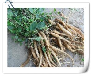 Cyathula Officinalis Kuan /Radix Cyathulae /Medicinal Cyathula Root Extract Powder pictures & photos