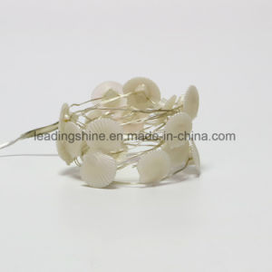 20 LEDs Warm White Silver / Copper Wire String Light Sea Shell String Light 4.5 V pictures & photos