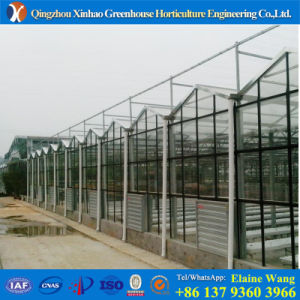 Promotion Hydroponic System Glass Greenhouse for Tomato pictures & photos