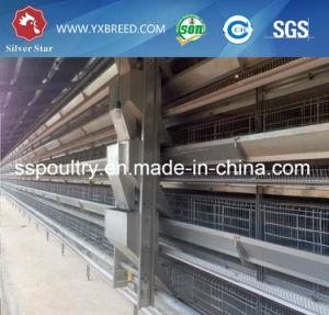 Al-Zinc Hot Galvanized Steel Material Poultry Eqiupment to Big Layer Farm pictures & photos