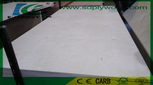 Birch Plywood C/D Grade 3.6-18mm for USA Market pictures & photos