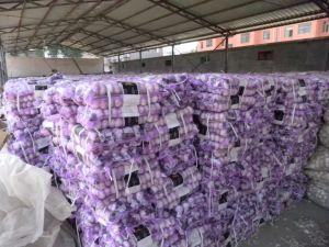 Jinxiang New Crop Fresh Pure White Garlic pictures & photos