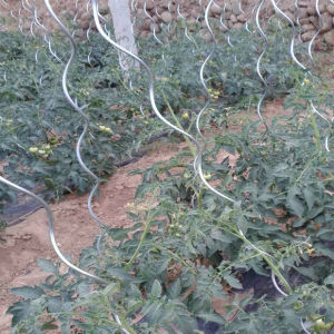 Aluminum or Electro Galvanized Steel Tomato Spiral Pergola/Spiral Support for Planting Tomato pictures & photos
