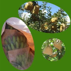 Breathable Banana Growing Paper Bag with Cheap Price to Prevent Diseases, Pests and Insect pictures & photos