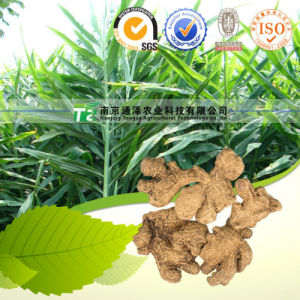 Plant Extract Raw Material and Herb Dried Ginger pictures & photos