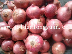 Fresh Wholesale Red Onion pictures & photos