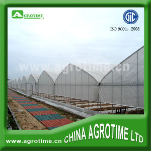 The Cheapest and Easily Assembled Multi-Span Greenhouse for Sale (CMS3212)