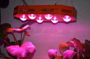 250W LED Growing Lights for Greenhouse