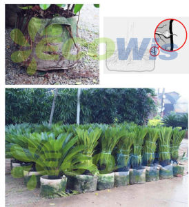 Root Control Bag for Trees Grow Bags (HT5090) pictures & photos