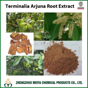 Terminalia Arjuna Powder Extract with Arjunolic Acid / Tannin 5% -20% pictures & photos