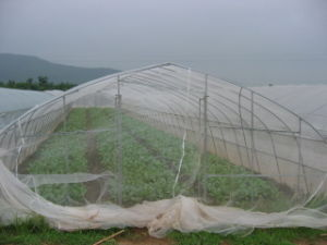 40X25 Mesh White HDPE Insect Nets Agriculture Insect Net pictures & photos