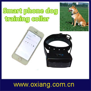 Factory Price Wholesale Wooden Pet Fence Wireless Remote Vibrator Smart Phone Yellow Leather Dog Training Collar Wt717 (OX-D1) pictures & photos