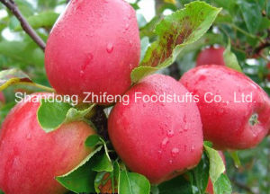 2015 New Fruit Fresh Huaniu Apple pictures & photos