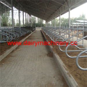 Cow Free Stall with Hot Galvanized Steel Pipe pictures & photos