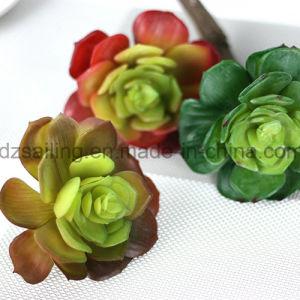 Decorative Plant Natural Touch Artificial Succulents Artificial Flower (SW17676) pictures & photos