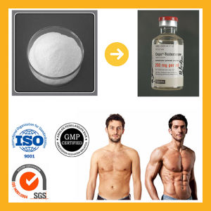 99.6% Purity of Testosterone Propionate pictures & photos