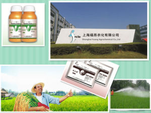 Mr. Habibi Agricultural Chemicals 97% Tc Technical Herbicide Prothioconazole pictures & photos