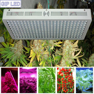 Gip Grow System 1200W LED Grow Lights for Tents pictures & photos