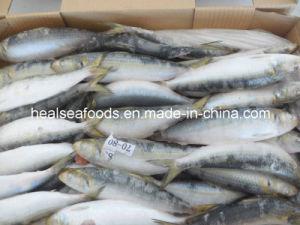 70/80PCS Frozen Whole Sardine, Tuna Bait pictures & photos