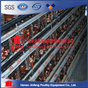Automatic Chicken Cage with Feeding and Egg Collection Machine pictures & photos