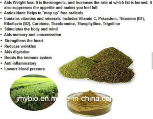 Weight Loss Yerba Mate Extract 10%~20% Polyphenols 5: 1~20: 1 pictures & photos