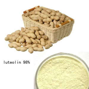 100% Natural High Quality Luteolin 98% pictures & photos