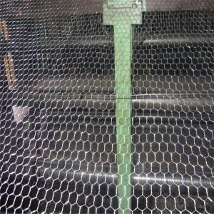 1′′ PVC Coated Hexagonal Wire Netting/Chicken Wire pictures & photos