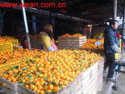 Small Baby Orange (3-5.5cm) pictures & photos
