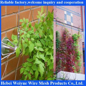 Stainless Steel Rope System for Green Plant pictures & photos