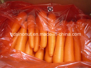 Exporting Indonesia Carrot pictures & photos