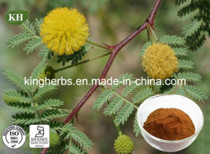Acacia Catechu Extract 6: 1, Catechins 40% (catechin, epicatechin) pictures & photos