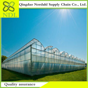 Agricultural PC Sheet Is Made in China pictures & photos