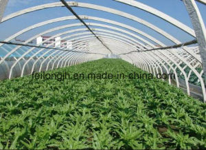 All Kinds of Greenhouse for Sale