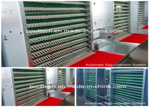Automatic Chicken Poultry Cage Farm Equipment for Breeder Chicken Cage System (H type frame) Poul Tech pictures & photos