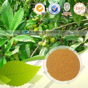 Natural Loquat Leaf Extract 25%-98% Ursolic Acid pictures & photos