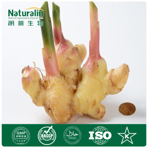 100% Natural Ginger Root Extract (Gingerols)