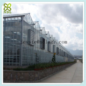 Flat Clear Tempered Glass Green House for Vegetable Growing pictures & photos