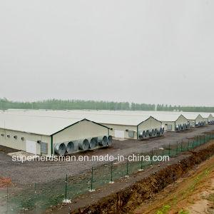 Light Steel Structure Poultry Farm Construction with All Prodution Equipment pictures & photos