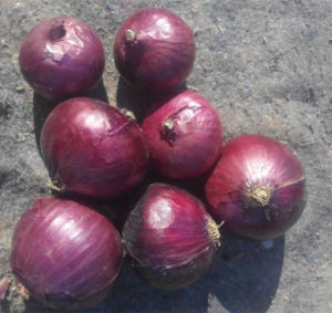 Chinese Shallot /Fresh Shallot Onions pictures & photos