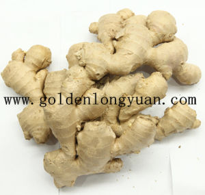 Whole Air Dry Ginger Packed with Carton for European Market pictures & photos
