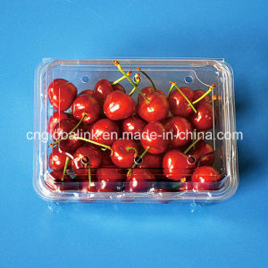 Disposable Bilster Plastic Fruit Packaging Container for Blueberry 500 Gram pictures & photos