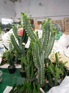 Artificial Plants of Cactus Mexico Style with 12 Hands pictures & photos
