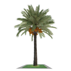Professional Manufacturer Artificial Palm Tree Artificial Trees for Decor pictures & photos