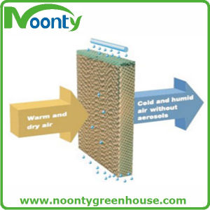 Cooling Pad System for Ventilation in Greenhouse pictures & photos