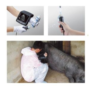 Portable Ultrasound Scanner for Animals pictures & photos