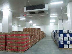 Cold Room for Fruits and Vegetables Walk in 100 Ton pictures & photos