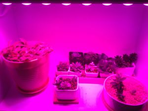 Indoor Plants LED Grow Light Bar for Developed Countries pictures & photos