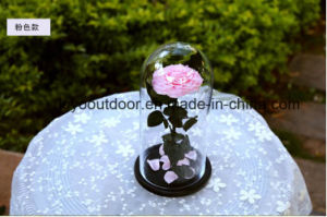 Glass Cover Preserved Fresh Flower Eternal Love pictures & photos